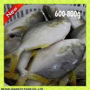 Frozen Golden Pompano Fish Pomfret