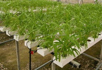 Chinese Green House Grow Systems for Vegetables