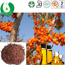 Hot sale Chronic gastritis medicine/Organic Certificated Seabuckthorn Seed Oil /Organic Seabuckthorn seed oil