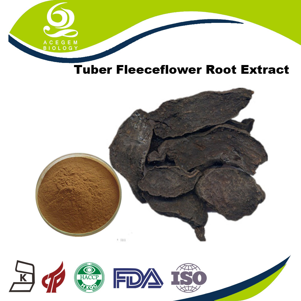 Polygonum Multiflorum Thunb Extract Powder Fleeceflower Root Extract