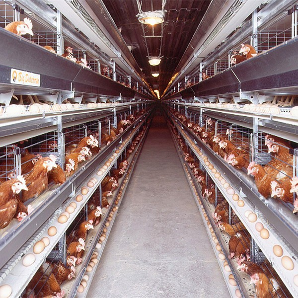 Design Layer Professional Laying Hens Chicken Cage Poultry Farm