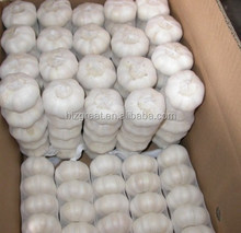 Hot sale fresh Normal White Garlic with best price