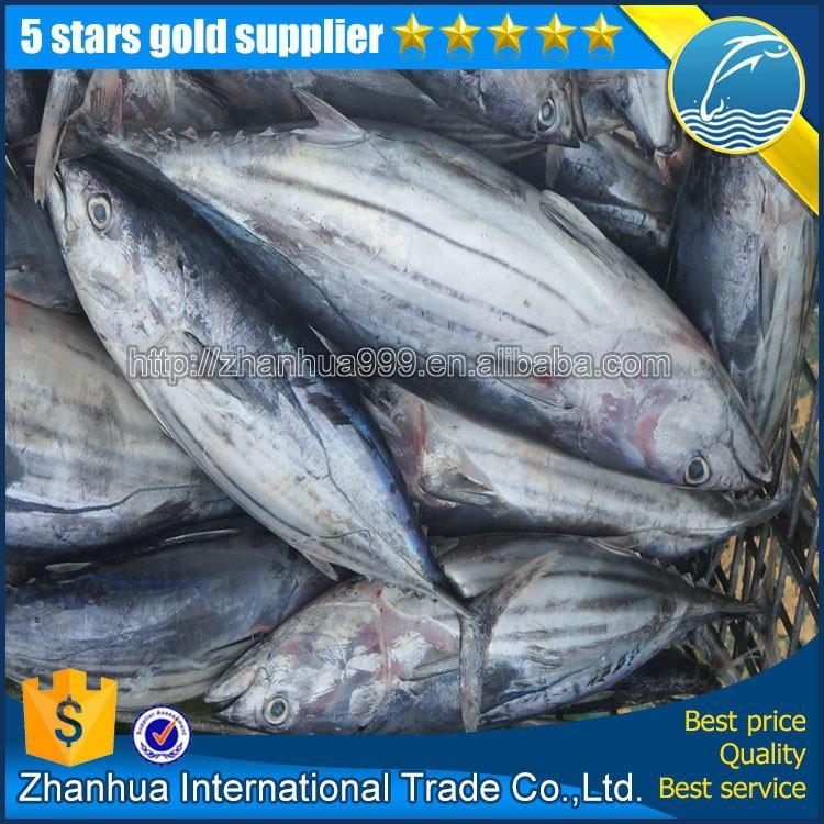 New arrival frozen skipjack tuna whole round for Tuna fish price