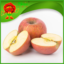 Fuji apple fresh red delicious apple fruit organic apple