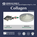 Type II Chicken Cartilage Collagen