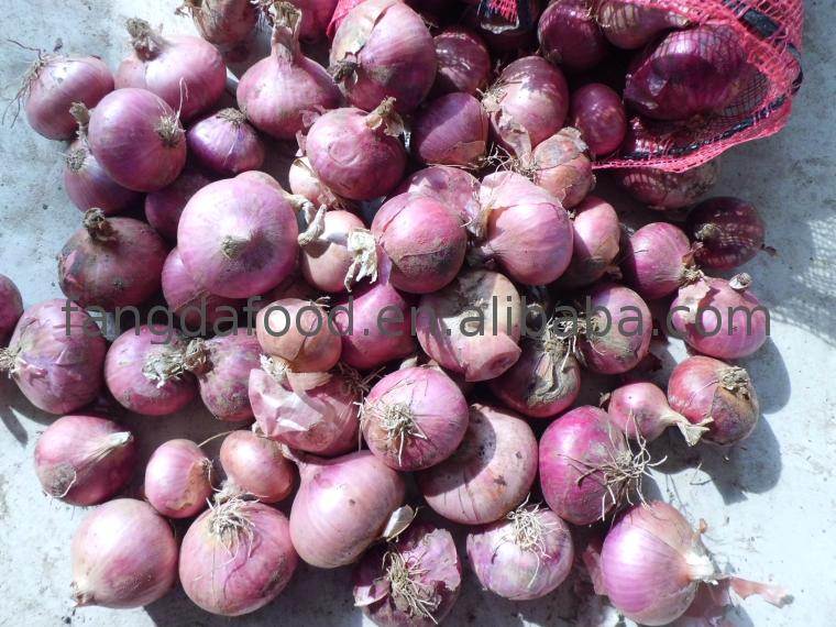 red onion from india