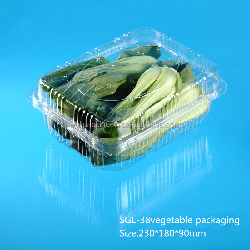 Big Disposable Plastic Vegetable Container manufacturer