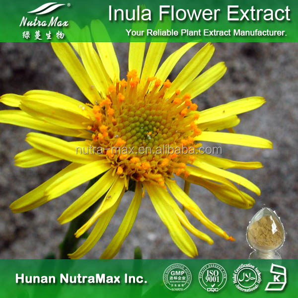 Flos Inulae Extract Powder, Flos Inulae Powder Extract, Flos Inulae P.E.