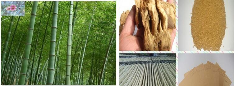 Bamboo pulp 03
