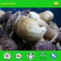 High quality mushroom frozen boletus with blue PET bags