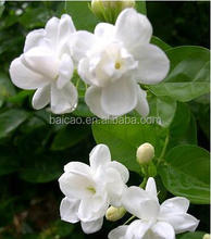 Natuarl Pure Jasmine Essential Oil for Massage Oils