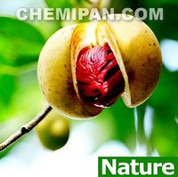 Nutmeg Essential Oil (Thai herb, Lavender, Citronella and more...)