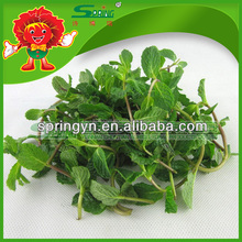 Bulk Fresh Mint Leaves with competitive export price