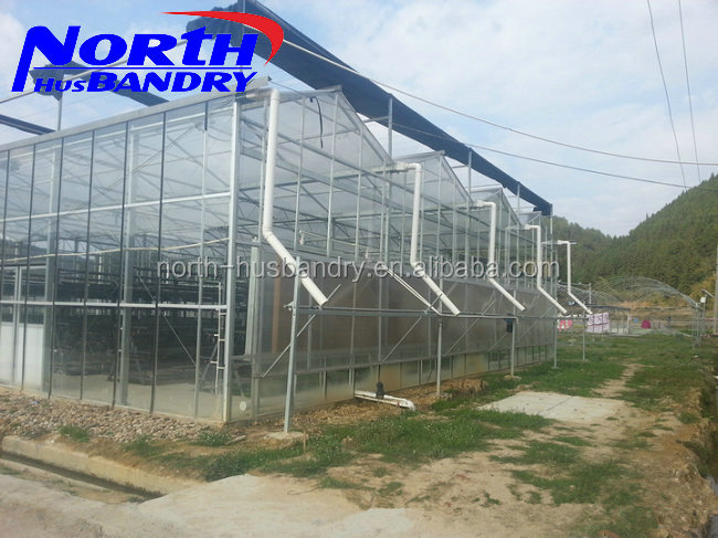 Large Sawtooth type low cost agricultural greenhouse, tomato greenhouse