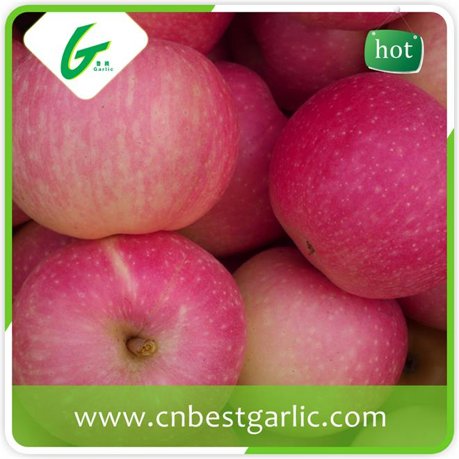 KOSHER passed professional chinese fresh sweet gala apple fruit