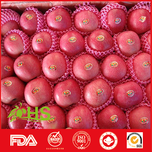 cheap yantai fresh fuji apples for india market fresh citrus fruits with low price