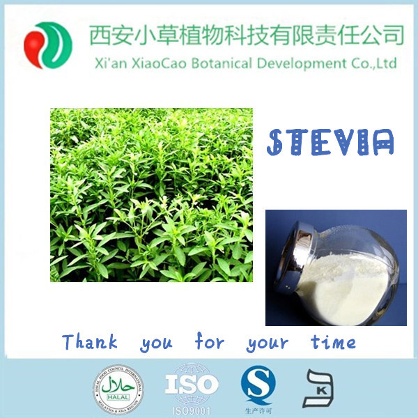 International price for stevia powder /sale stevia seeds