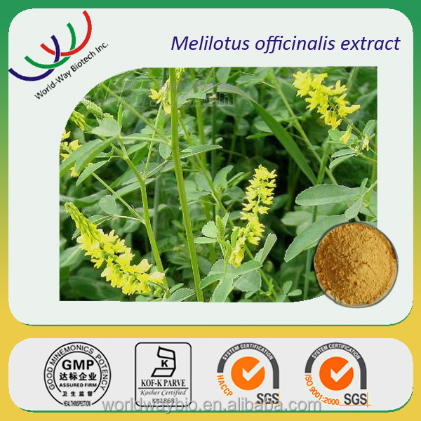 Sweet clover extract coumarin,high quality melilotus officinalis extract coumarin powder
