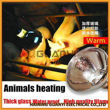 Poultry equipment infrared heating lamp for piglet chicks