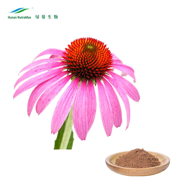 Hot Sell Echinacea Extract, Echinacea Root Powder, Echinacea Purpurea Herb Extract