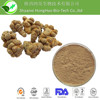 Free Sample Brown Yellow Radix Notoginseng Root Extract Supplier with top quality competitive price.