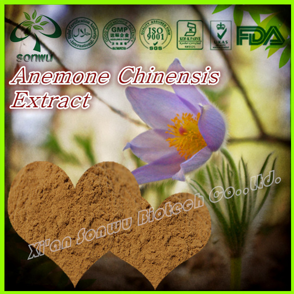 Natural Anemone Root Extract/Anemone chinensis extract