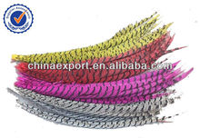 Lady Amherst Pheasant Tail Feather Long Dyed Pheasant Feathers For Sale