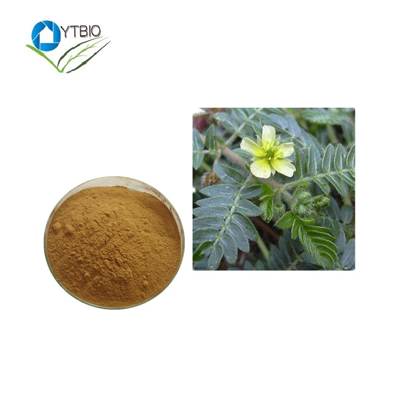 Lowest Price And High Quality Tribulus Terrestris Saponins Extract Powder