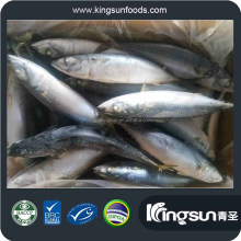 New Arriving High Sale Seafood Frozen Pacific Mackerel WR