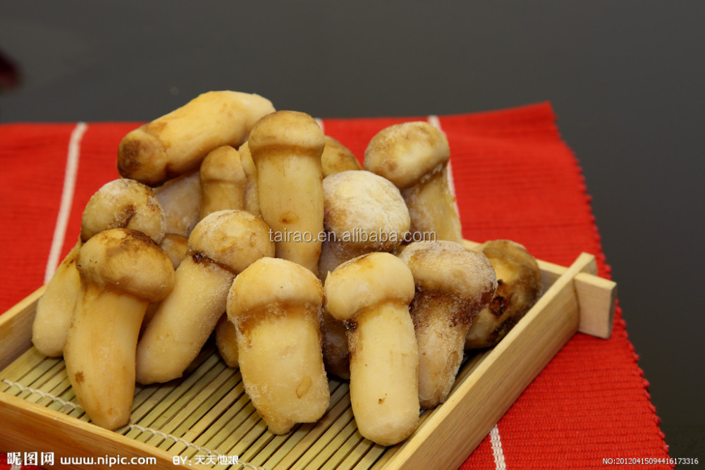 Frozen matsutake mushrooms from yunnan the south of China