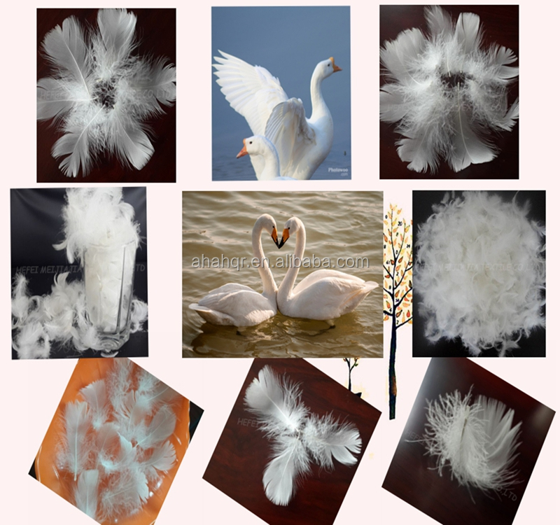 Bulk washed white duck or goose feathers and down