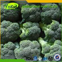 hot sale fresh broccoli with lower price