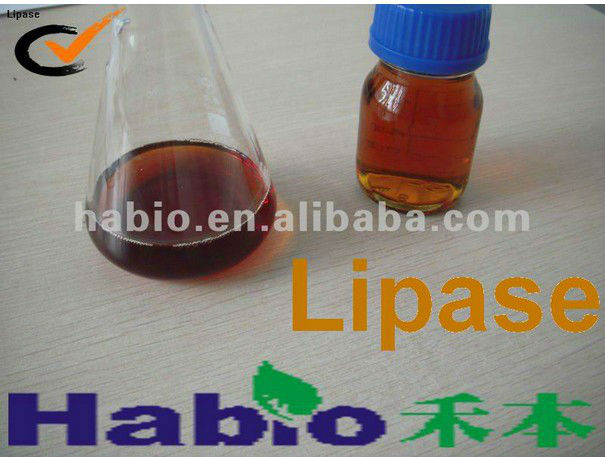 Biodiesel specialized lipase (100000U/ml)