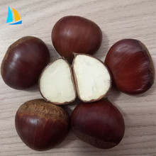 Chinese Liaoning raw fresh chestnut for chestnut importer