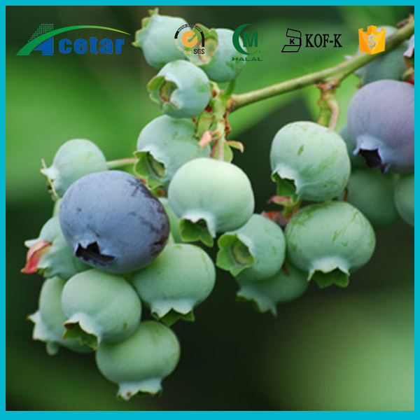 with Kosher, Halal, FDA registered fresh bilberry powder extract products
