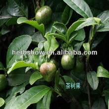 Chinese Tea tree seeds for planting