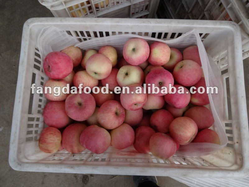 delicious china fuji apples/pink colour apple