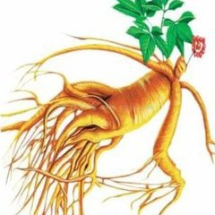 Pure Natural Panax Ginseng Extract Powder