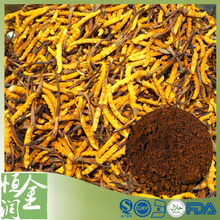 Food Supplement Cordyceps Sinensis Extract Powder