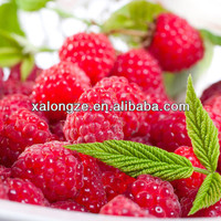 mighty raspberry ketone /natural raspberry ketone made in china / natural raspberry ketone