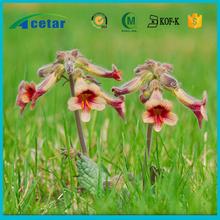 Plant extract Fever cooler Chinese herb rehmanniae extract