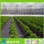 PP spun-bond nonwoven anti-weed fleece weedmat