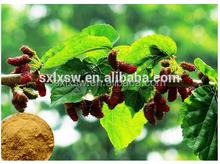 Natural Mulberry Leaf Extract 1-Deoxynojirimycin diabetes