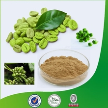 Bulk Powder Pure Green Coffee Bean Extract/50% Chlorogenic acid/Green Coffee Bean Extract