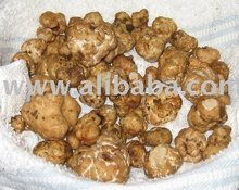 Chinese healthy naturally Truffles Mushroom Pilz champignon