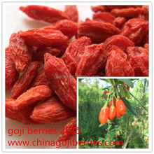 hot sale new season goji berries wolfberry free samples
