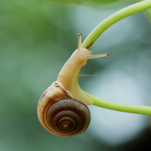 High Effective Kill Garden snail Insecticide Carbaryl Powder CAS:63-25-2