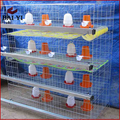 chick cage,baby chick cage,1day old chicks for sale