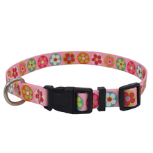 Factory Price Plain Nylon Webbing Dog and Cat Collars and leash for Pet