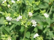 Stevia Leaf Extract Type and Powder Form stevia